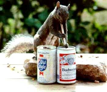 Name:  squirrel.jpg Views: 123 Size:  15.8 KB